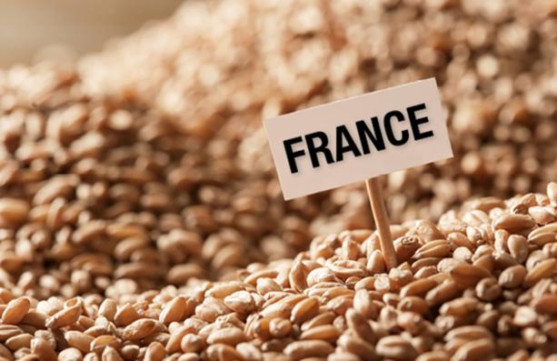 Blé Tendre français : Une baisse de 2% notée en mai