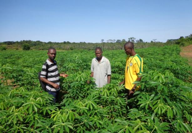 Agriculture : Les pratiques d'agriculture intelligente aident les petits exploitants à faire face aux conditions météorologiques