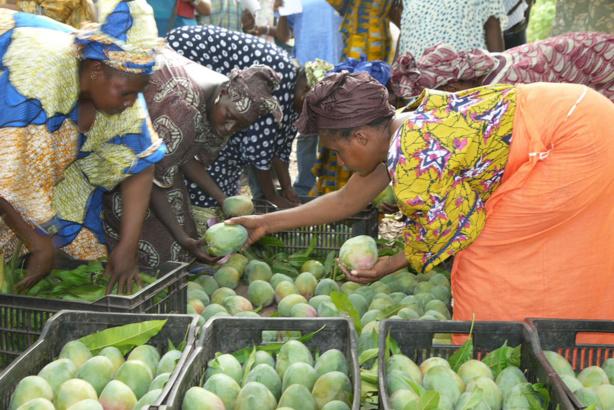 De plus en plus populaires, les fruits tropicaux représentent une opportunité pour les pays en développement (FAO)