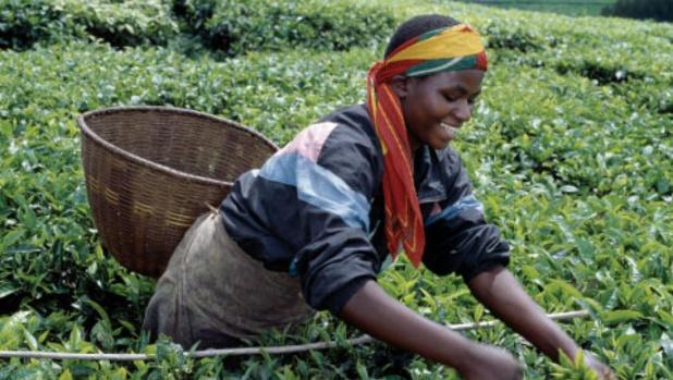 Entendre les voix des jeunes agriculteurs africains