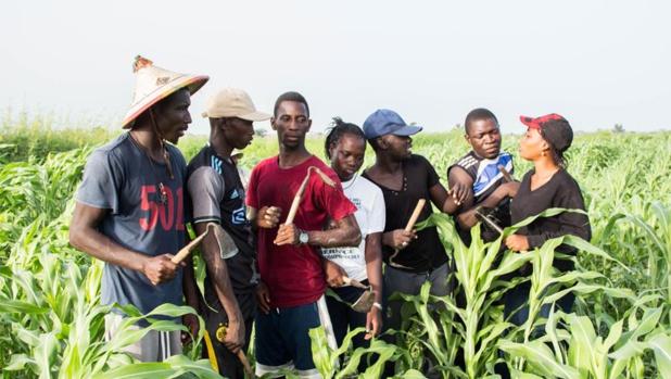 SENEGAL : ''Ferme factory'', fin de la saison 1 de la première émission de téléréalité au service de l'agriculture