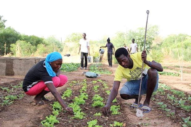 AGRICULTURE : L'ANIDA prévoit de réaliser 450 fermes agricoles d'ici à 2019