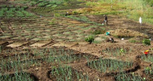 Sénégal : Le Forum Civil invite l'Etat à faire preuve de transparence sur 302 milliards de FCFA investis dans l'achat de semences