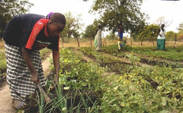 Sénégal : Plus de 90% des exploitations agricoles sénégalaises sont familiales