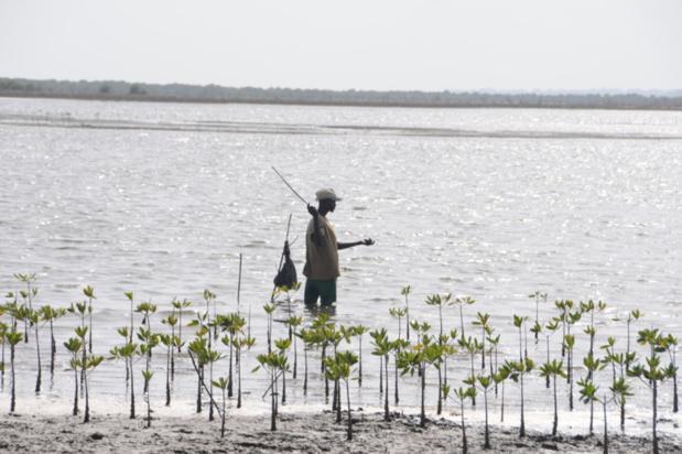 Préservation de la ressource halieutique : Vers la mise en place d'un programme de renforcement des AMP de Cayar, Sangomar et Joal-Fadiouth