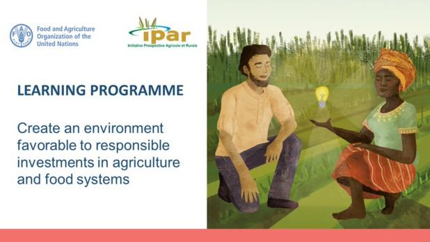 Investissement responsable dans l'agriculture : La Fao lance un nouveau programme d'apprentissage