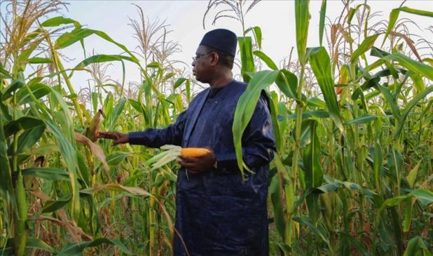 Agriculture au Sénégal : la donne sera nouvelle si…