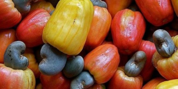 Acacarde : Le gouvernement ivoirien adopte des mesures fiscales incitatives pour booster la transformation locale