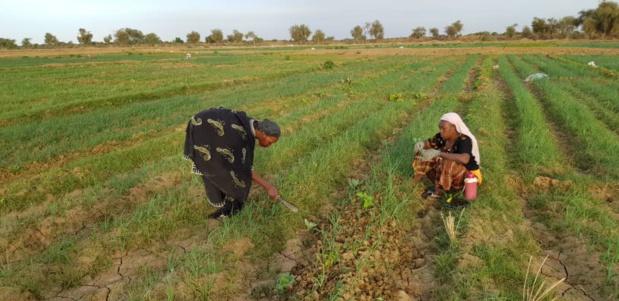 Sénégal : L'Agence française de développement injecte 6,4 millions d'euros dans les secteurs de l'agriculture et de l'eau