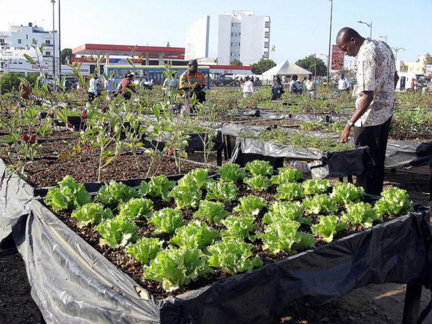 Développement de la chaine de valeur horticole au Sénégal : L'Ipar et l'Arm balisent des pistes de solutions