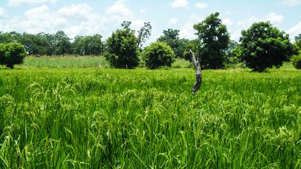 Alimentation et agriculture: reconstruire en mieux