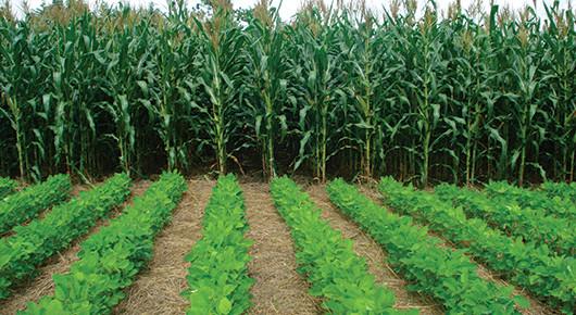 Situation agricole dans le département de Mbour : La tutelle locale exprime son optimisme