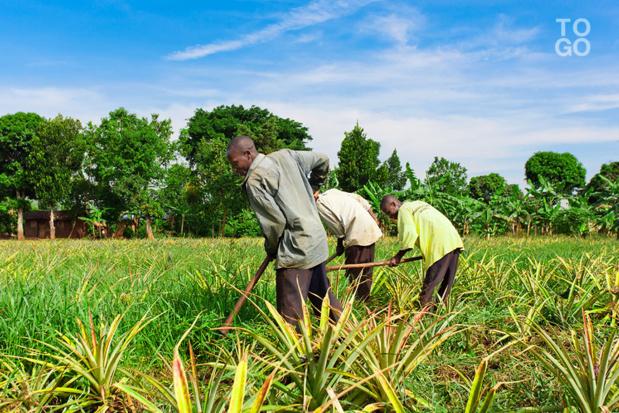 Développement des filières riz et mil et en Côte d'Ivoire et au Sénégal : Ifc et Ocp Africa signent un partenariat