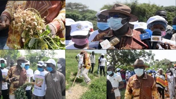 Mamadou Ndione Directeur général du COSEC : la relance de l'économie sénégalaise passe par la relance agricole