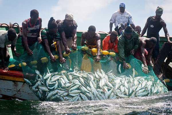 Journée mondiale de la pêche : Greenpeace appelle à une gestion transparente des ressources halieutiques au Sénégal
