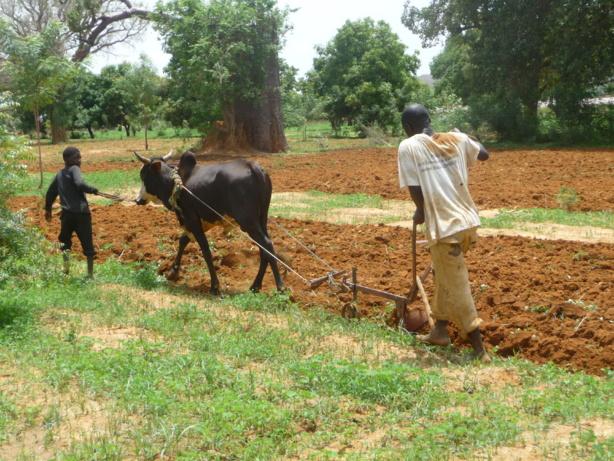Le FNDASP est un catalyseur destiné à capter des ressources pour financer le Système National de Conseil Agro-Sylvo-Pastoral (SNCAPS), selon le ministre de l'agriculture et de l'équipement rural