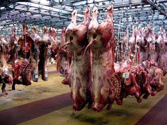 Chaine d'abattage de viande ultra moderne