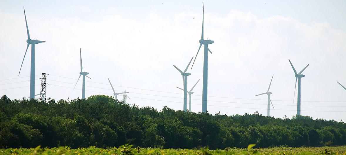 24 millions d'emplois vont être créés dans l'économie verte (OIT)