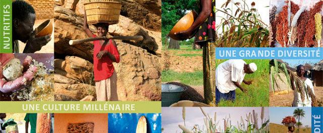 Harmonisation de la législation semencière régionale : Des organisations paysannes dénoncent le forcing de l'agribusiness