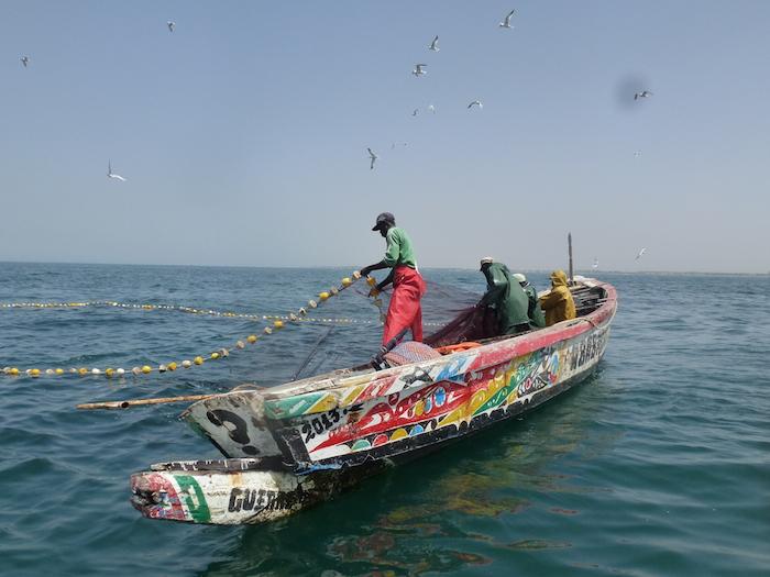 La plateforme pêche sur le changement climatique dans la région de Thiès mise en place