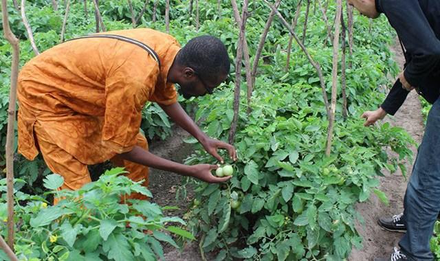 Agriculture: L'Afrique affute son expertise dans le domaine des statistiques agricoles