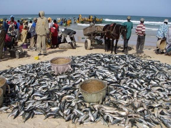 Sénégal : repli de l'activité au mois de septembre 2018
