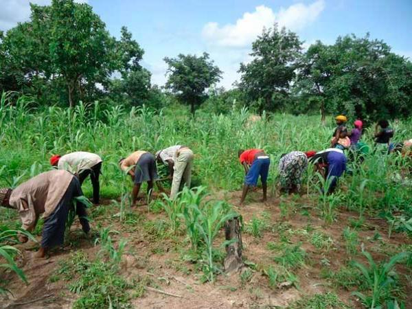 Sénégal : La campagne agricole atteint des productions  records