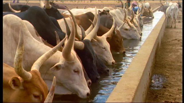 Sénégal : Le sous-secteur de l'élevage s'est replié de 16,9%, au troisième trimestre 2018