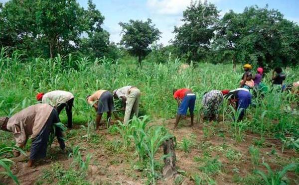 Agriculture : Un programme d'adaptation pour pallier le déficit pluviométrique dans certaines régions