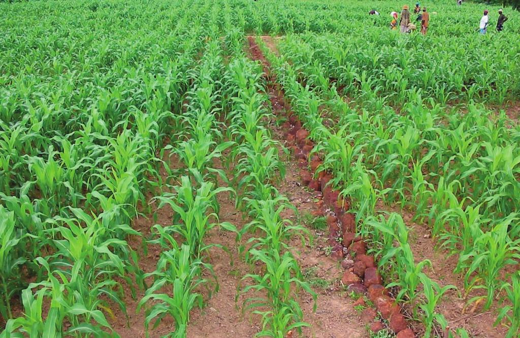 LE CORAF VEUT EXPÉRIMENTER UNE AGRICULTURE DE CONSERVATION RÉSILIENTE AUX EFFETS CLIMATIQUES
