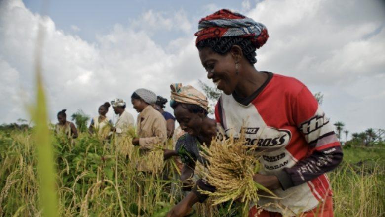 Offre mondiale de céréales : Les prévisions estimées à 3419,1 millions de tonnes