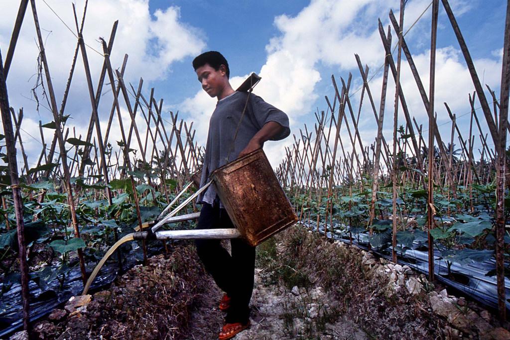 Photo : BIT/Asrian Mirza Arroser les plantes fait partie des tâches des enfants qui travaillent dans le secteur de l'agriculture dans le nord de Sumatra, en Indonésie.