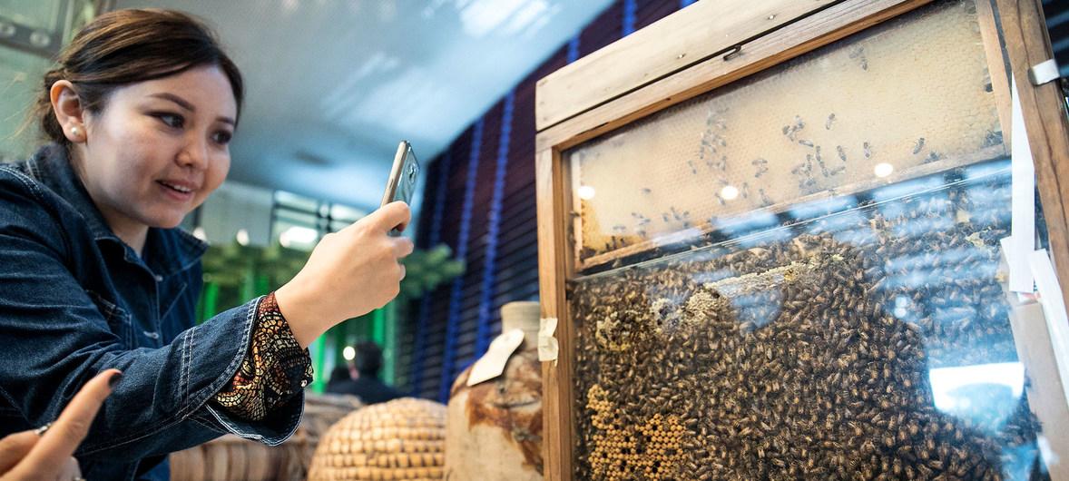 Le déclin des populations d'abeilles menace la sécurité alimentaire et la nutrition à l'échelle mondiale (ONU)
