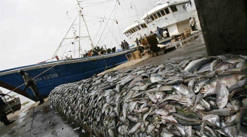ACCORD DE PECHE AVEC L'UNION EUROPENNE: 8.800 tonnes de thons capturées par an dans les eaux sénégalaises