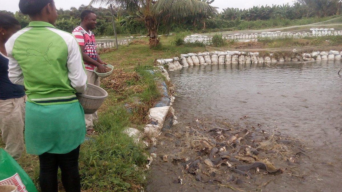 Nigeria : La production d'aliments pour poisson stimulée par les investissements privés
