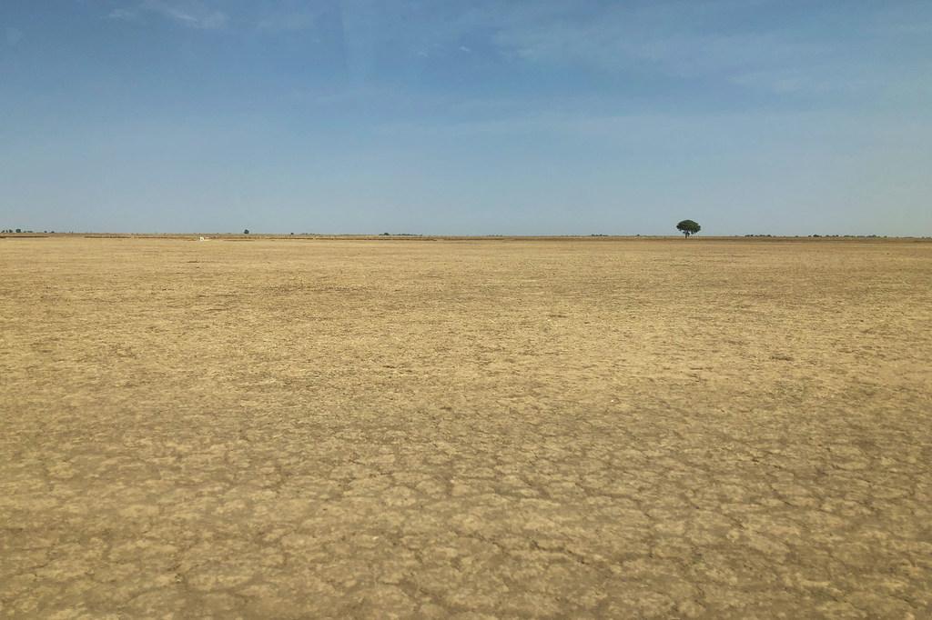 Photo ONU Info/Daniel Dickinson Le changement climatique et la dégradation des sols a contributé à la désertification dans le nord-est du Cameroun.