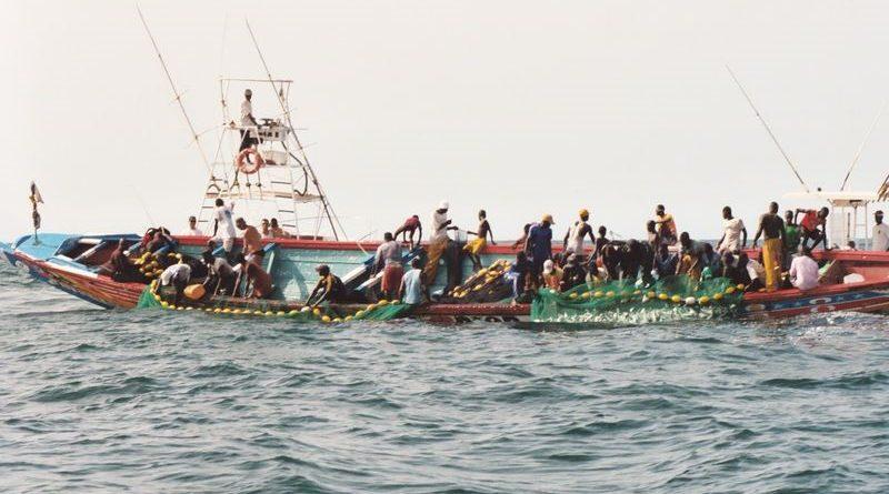 Sénégal : Forte hausse du secteur primaire au mois de Décembre