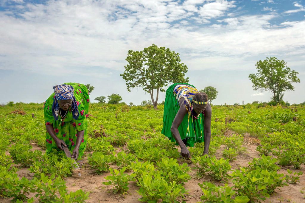 PAM/Giulio d'Adamo Dfemmes travaillent dans un champ de l'État de Jubek, au Soudan du Sud, où le Programme alimentaire mondial promeut une agriculture durable pour renforcer les revenus et les moyens de subsistance.