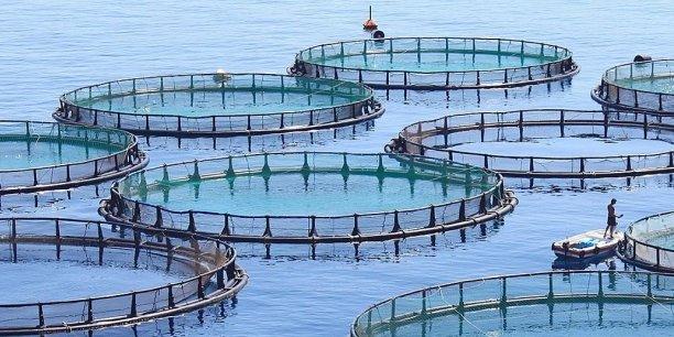 Année internationale de la pêche et de l'aquaculture artisanale en 2022 : Une opportunité de mettre en œuvre les directives internationales pour la pêche artisanale durable, selon le CAOPA