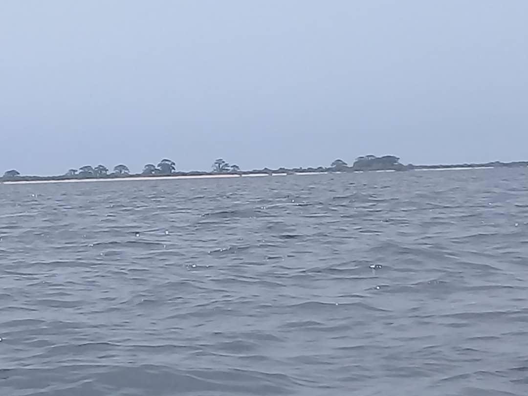 Nettoyage des sites de pointe des tortues marines : une activité visant la préservation de l'écosystème marin et côtier