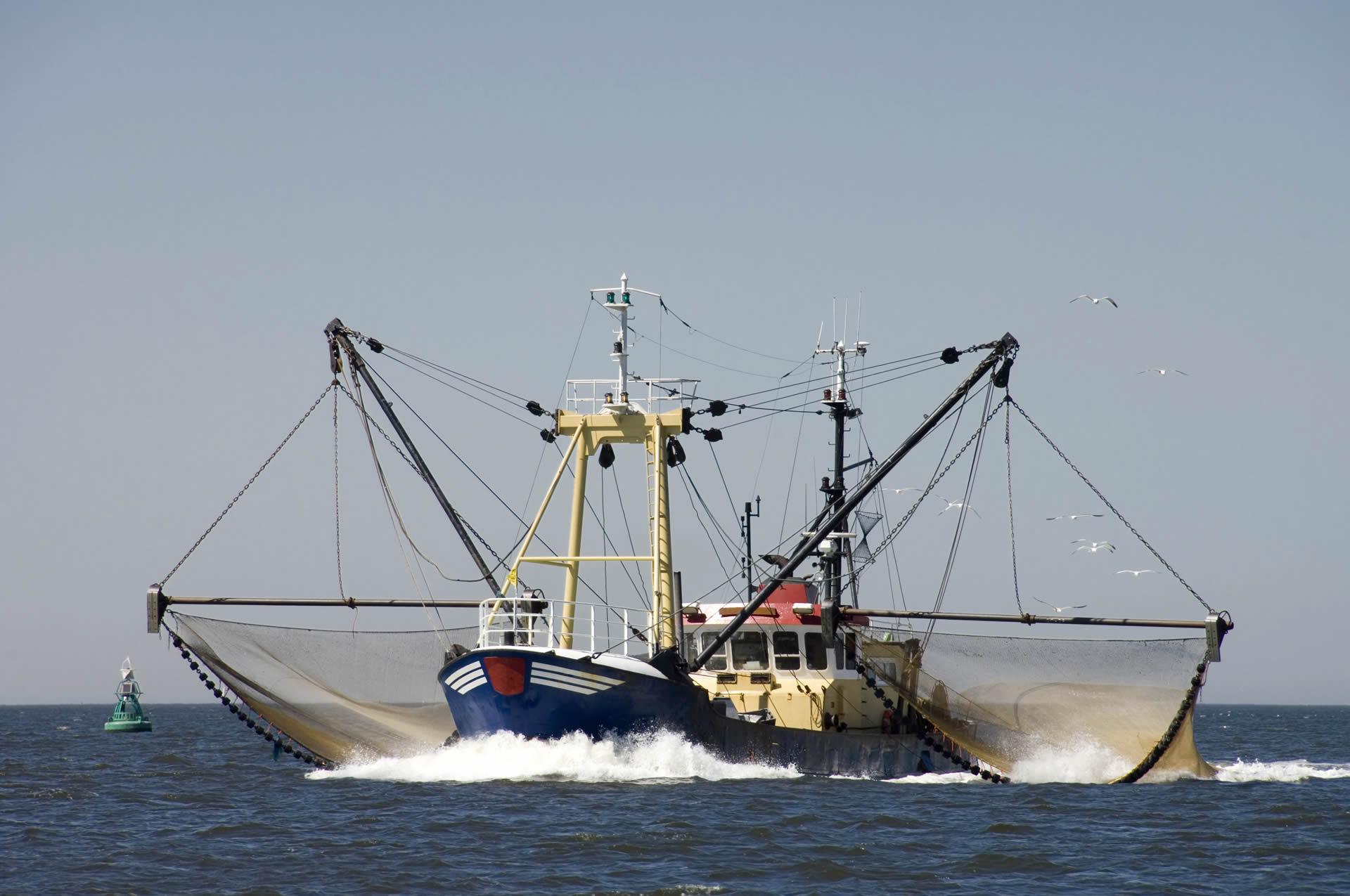 Afrique de l'Ouest : Greenpeace accuse les multinationales de la pêche de pillage des océans