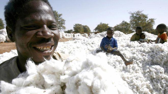 Cours mondiaux des matières premières : Les prix du sucre, du pétrole brut et du coton en hausse au mois d'août