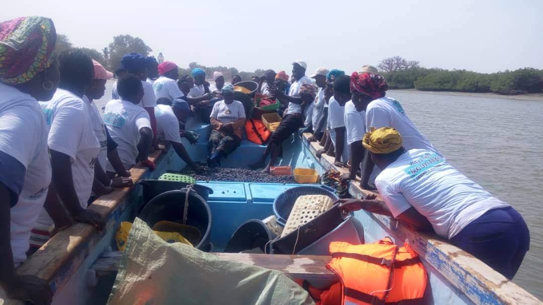Senegal: Neuf tonnes d'arches ensemencées par les Femmes de Joal-fadiouth