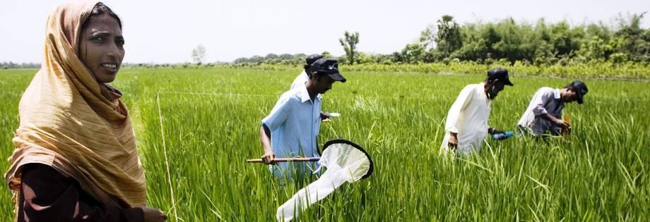 Innovation agricole : Lancement du projet Tap-Ais