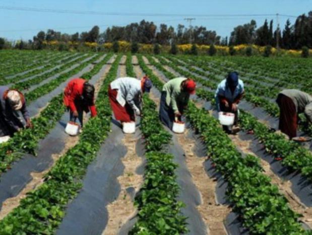 Projet Agropole Centre : Une mission conjointe Bad, Bei, Enabel séjourne au Sénégal