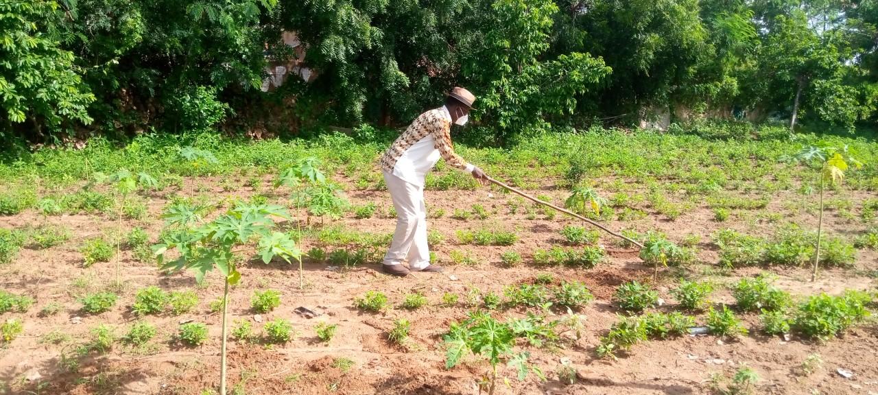 Diass: plus de 100 ha exploités par 130 producteurs locaux