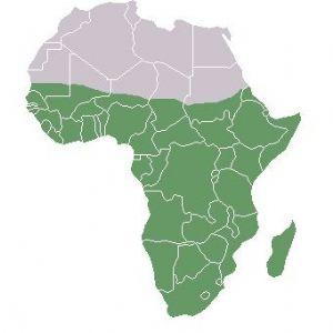 Croissance économique en Afrique : Le CRES initie une rencontre à Dakar