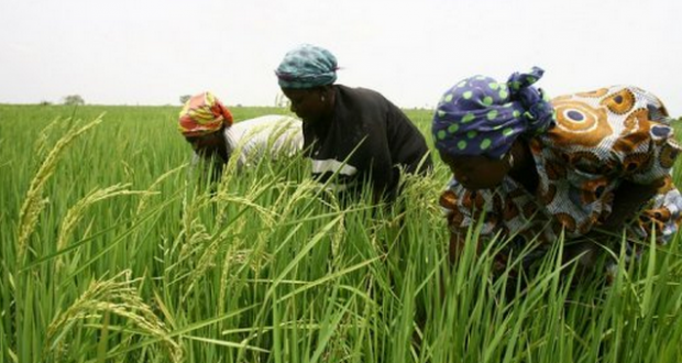 Agriculture : Une étude de l'IPAR déplore la main mise des gros producteurs sur les subventions agricoles au Sénégal