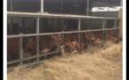 Agriculture : Les fermes Naatangués recoivent l´appui de la coopération espagnole