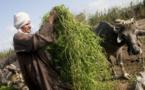 La sécurité alimentaire : La situation se détériore au Proche-Orient et en Afrique du Nord